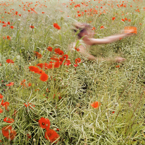 CAROL_FULTON_PHOTOGRAPHY_Poppies - Carol Fulton.jpg