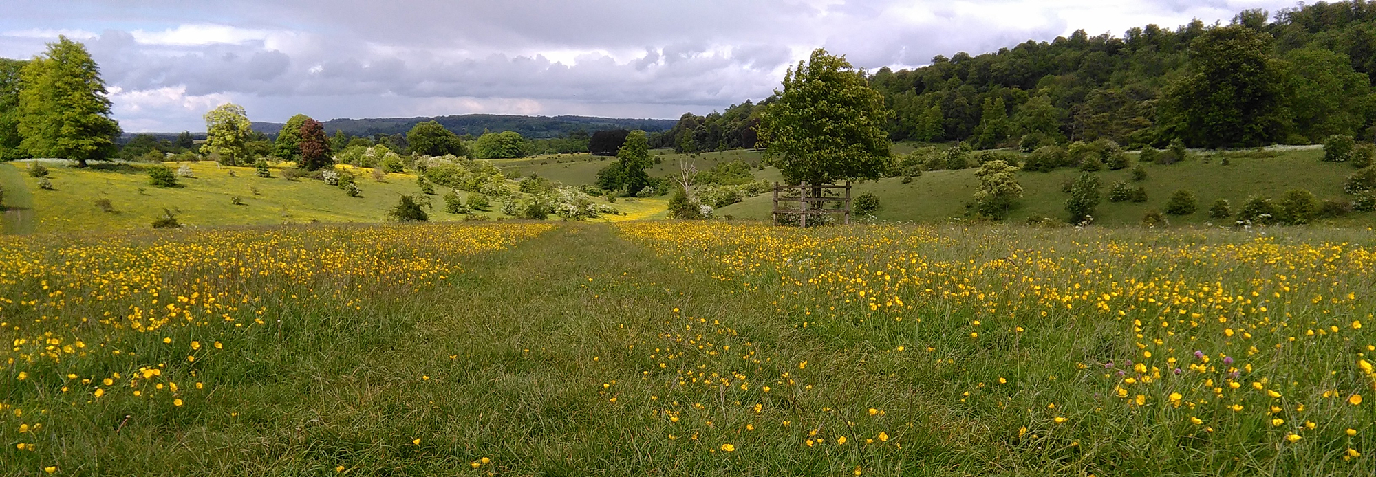 5 MINUTES WALK from the studio is the beautiful  Tring Park  - 264 acres of chalk grassland, scrub, mixed woodland and parkland landscaped by Charles Bridgeman in the late 17th and early 18th centuries - worth a visit if you have time!
