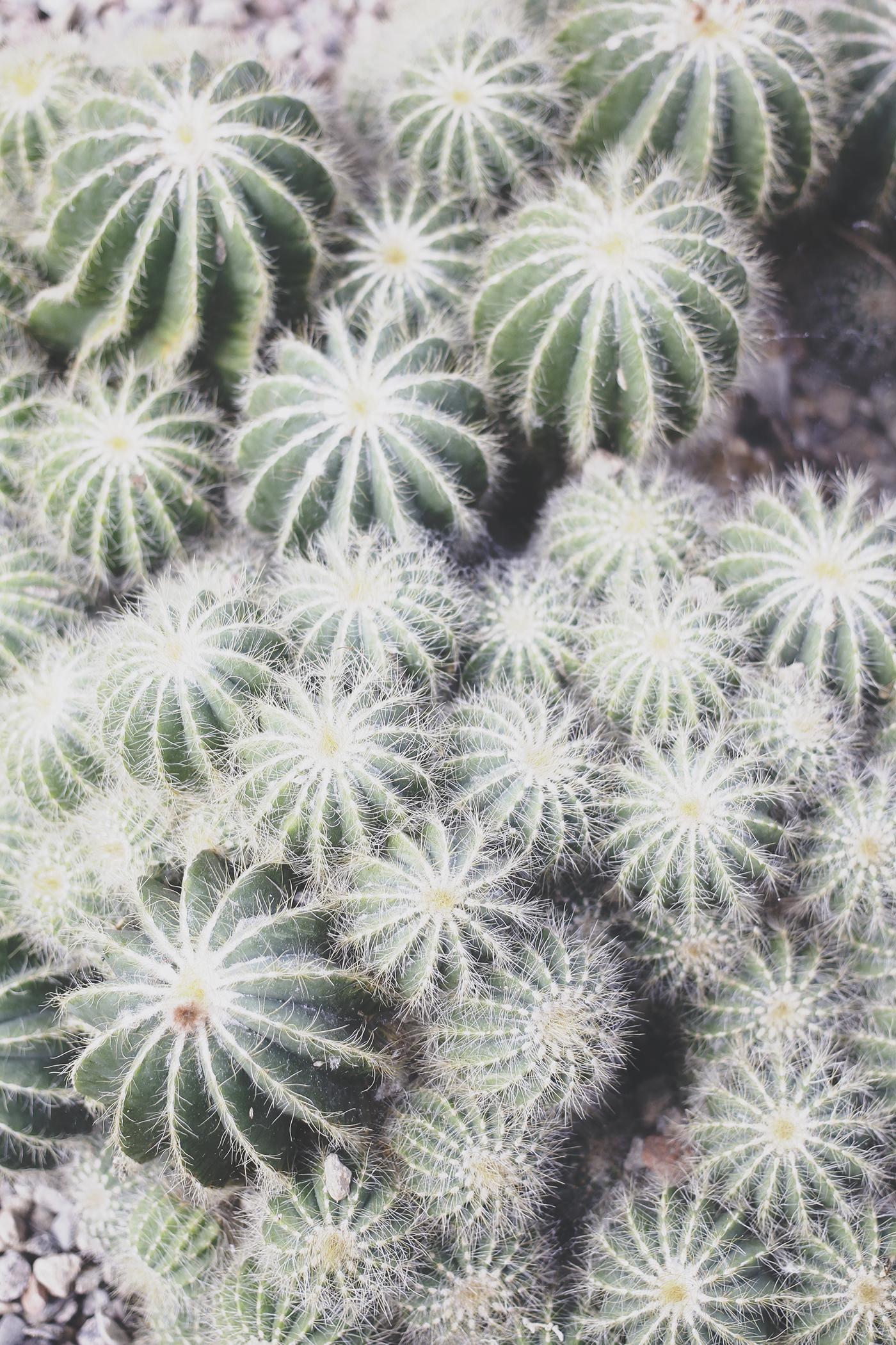 botanics-4.jpg