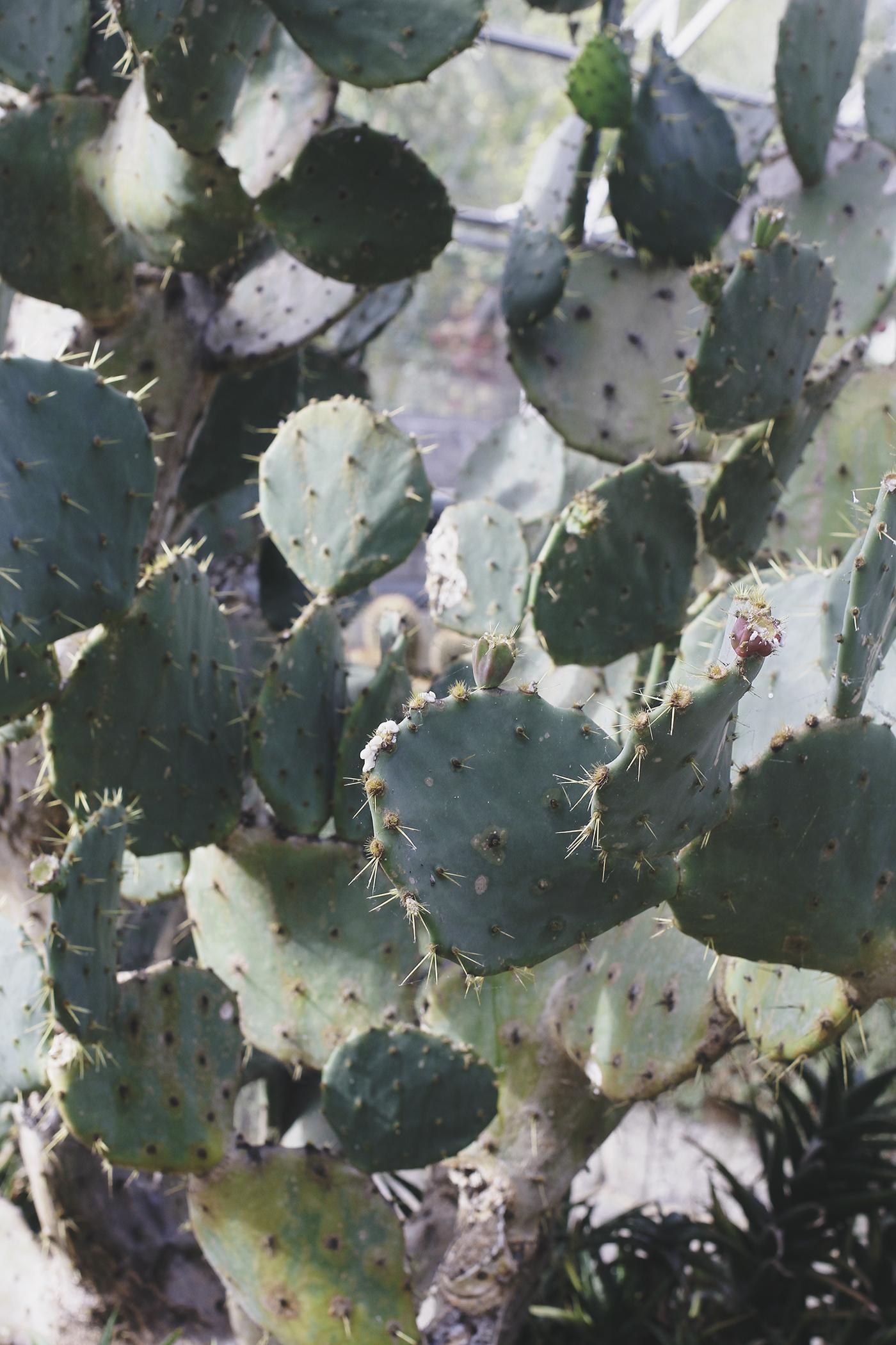 botanics-5.jpg