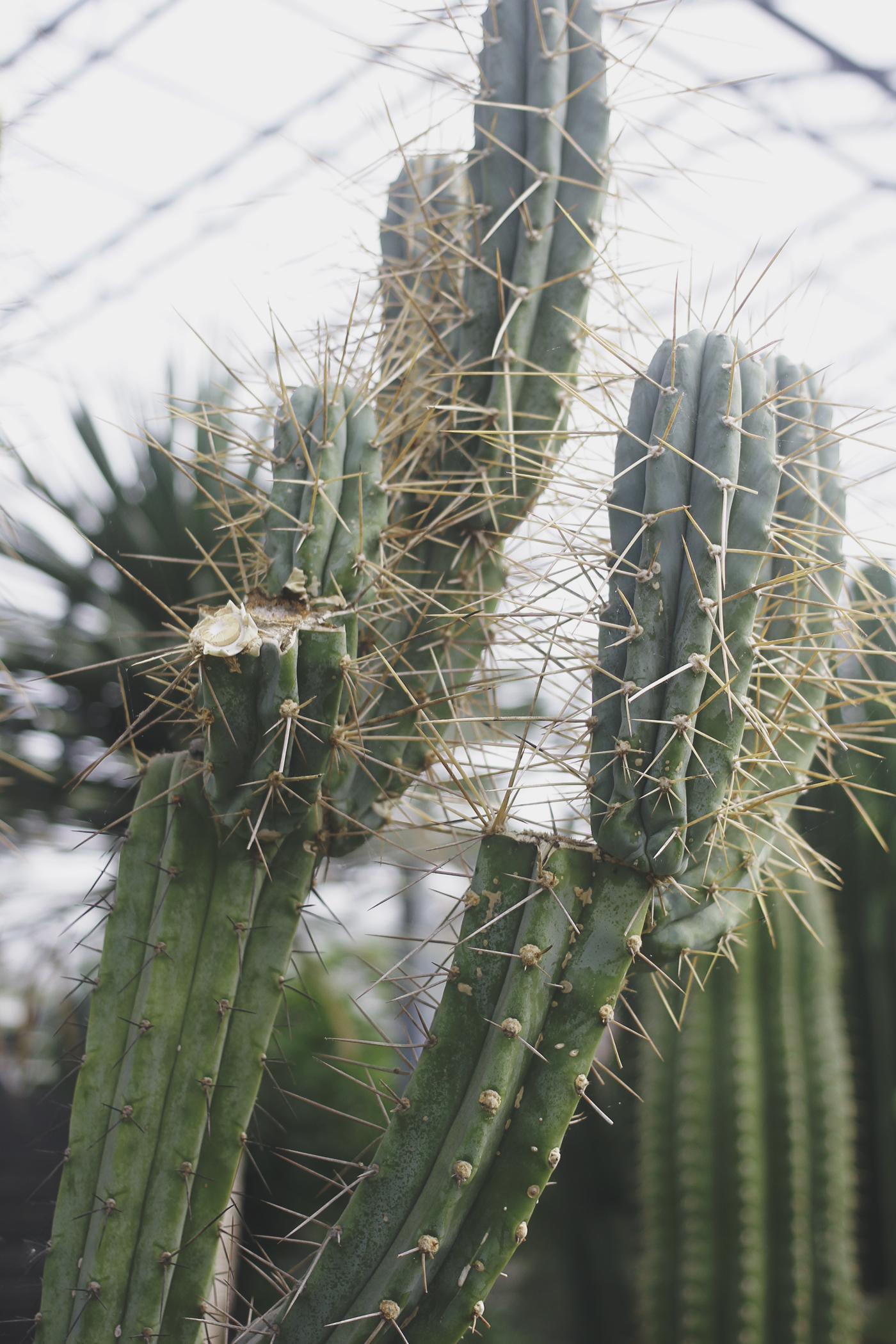 botanics-7.jpg