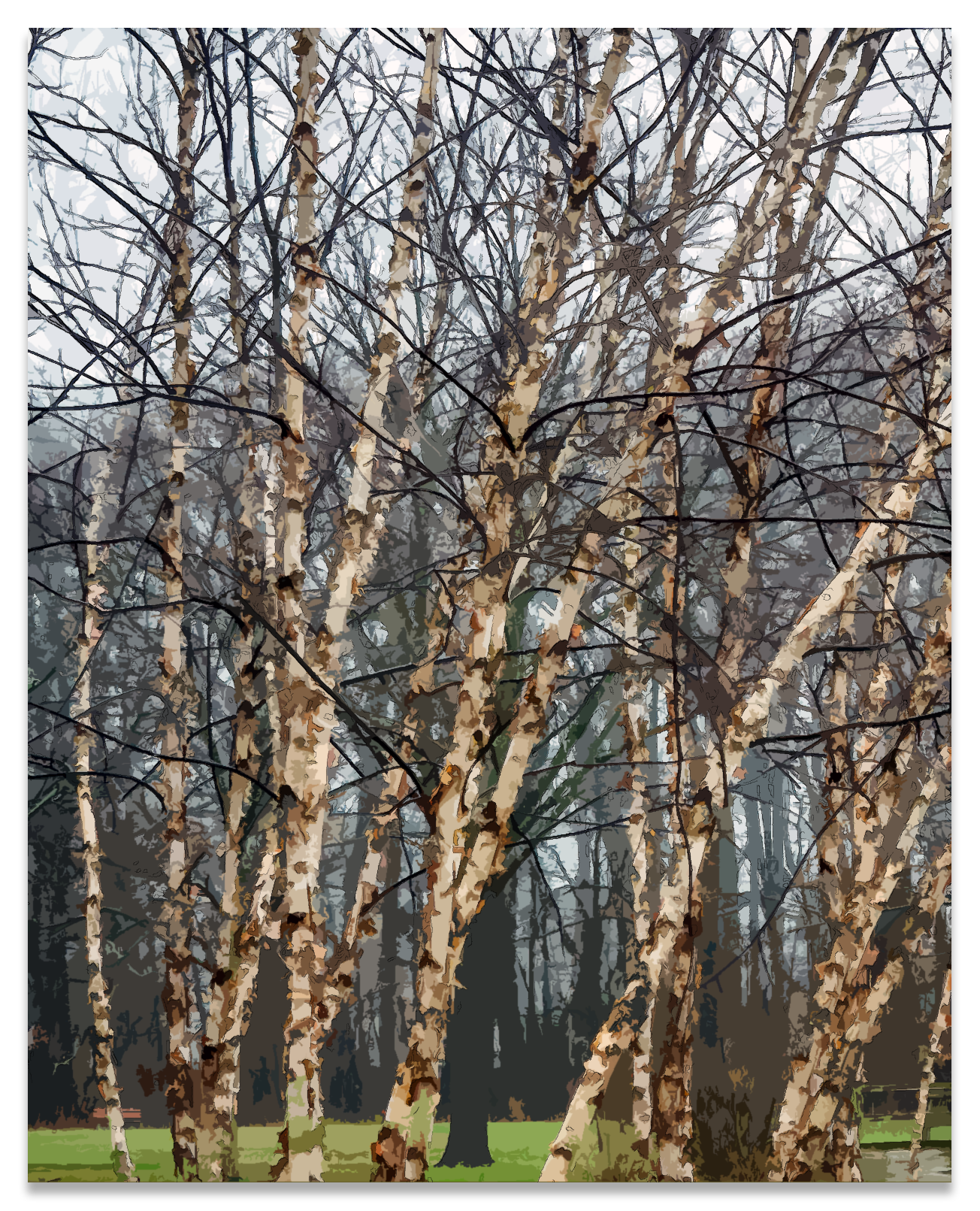 20170406 -Birch 3 - P4060599.png