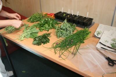 Herbs harvested at Hopetown Hostel