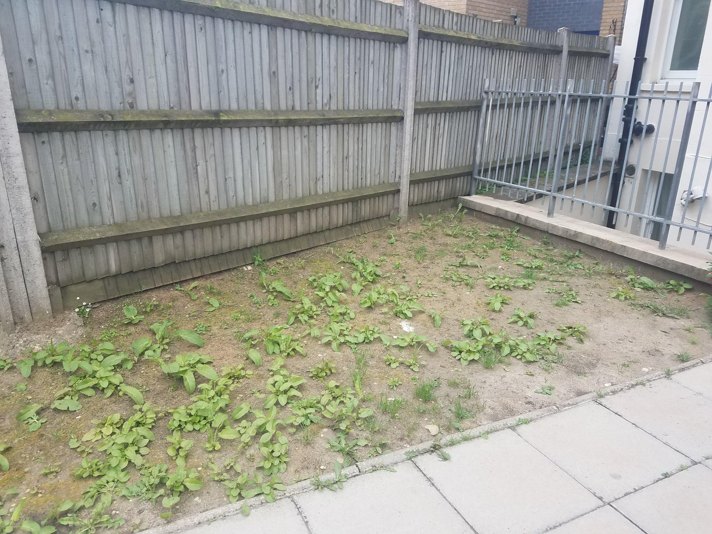 Soil Sisters Garden (6).jpg