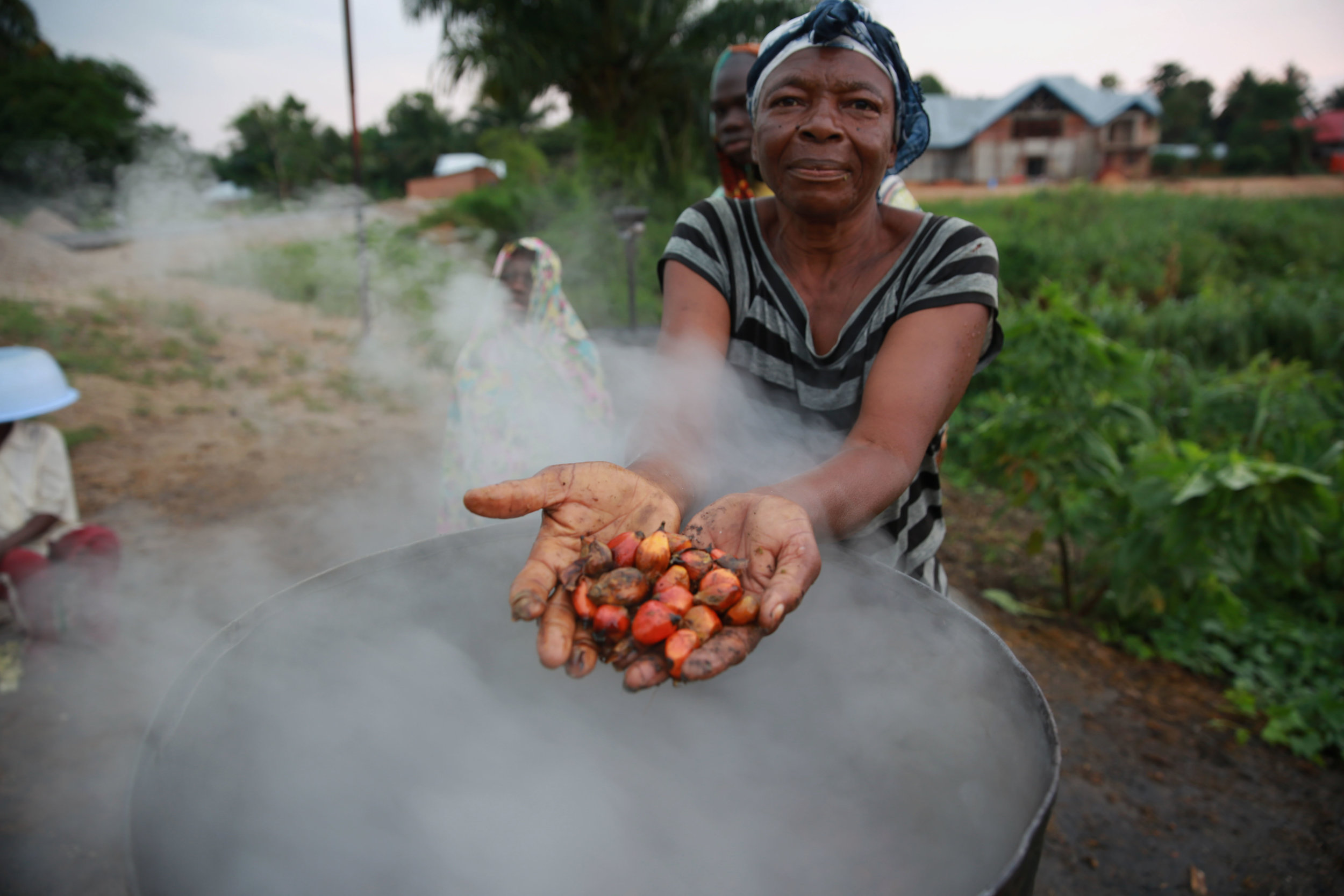 Palm Oil Production, DR Congo. Photo credit: http://bit.ly/2msgaEn