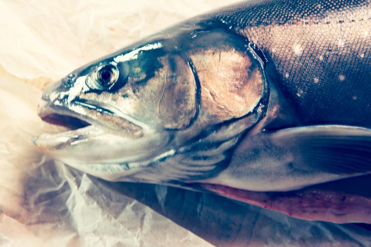 Fischkopf_klein_1F5Y9196.jpg