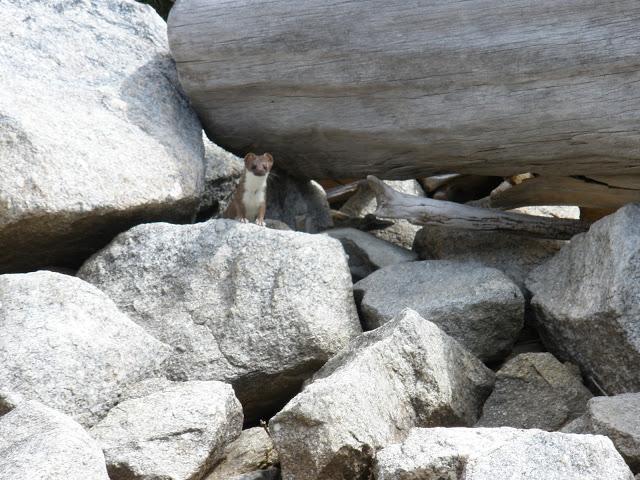 animal_BlodgettBNF_SierraClubTrip2010.JPG