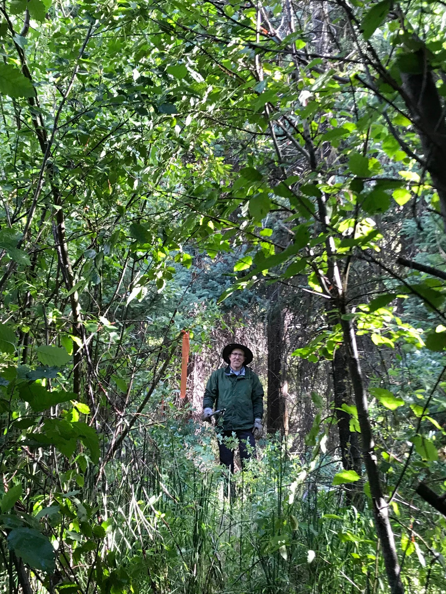Our amazing volunteer Tom standing amongst some of the 'willow tree jungle' we were clearing.