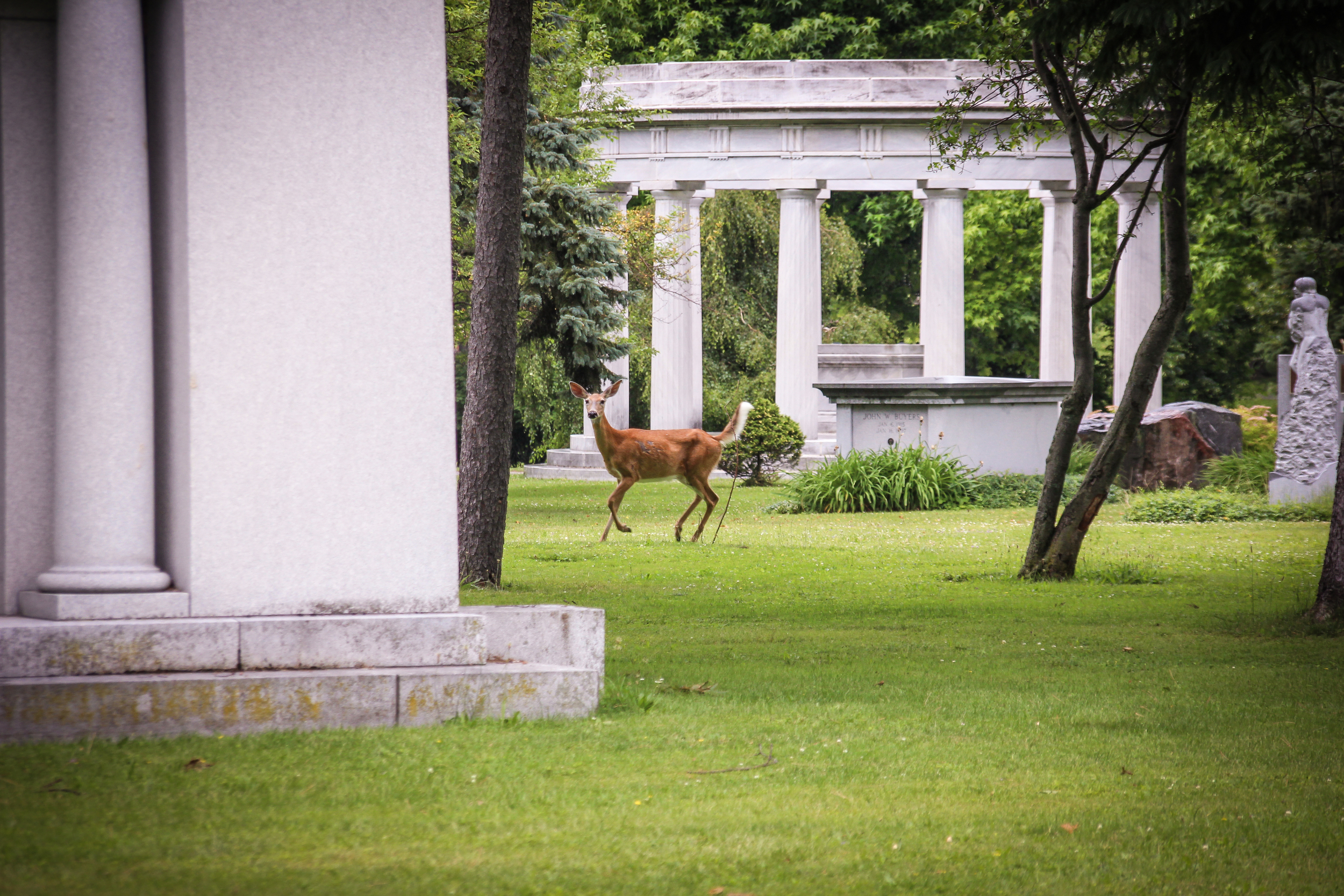 Forest Lawn Cemetery, Buffalo, NY.  The cemetery has some interesting inhabitants...