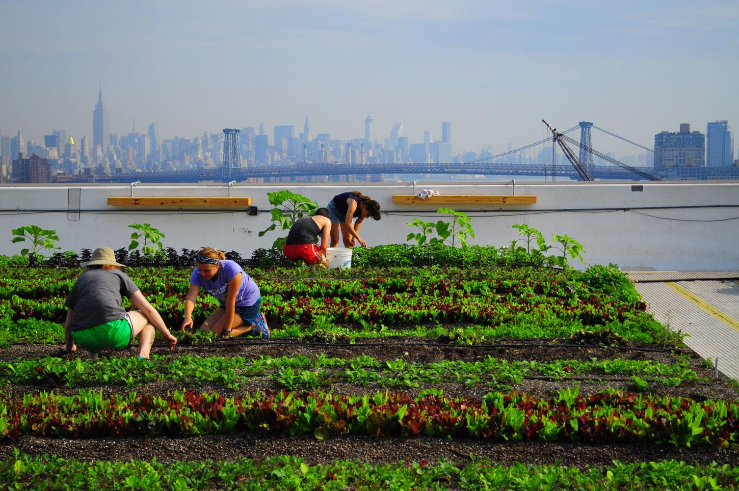 Brooklyn Grange, theLargest Rooftop Soil Farm
