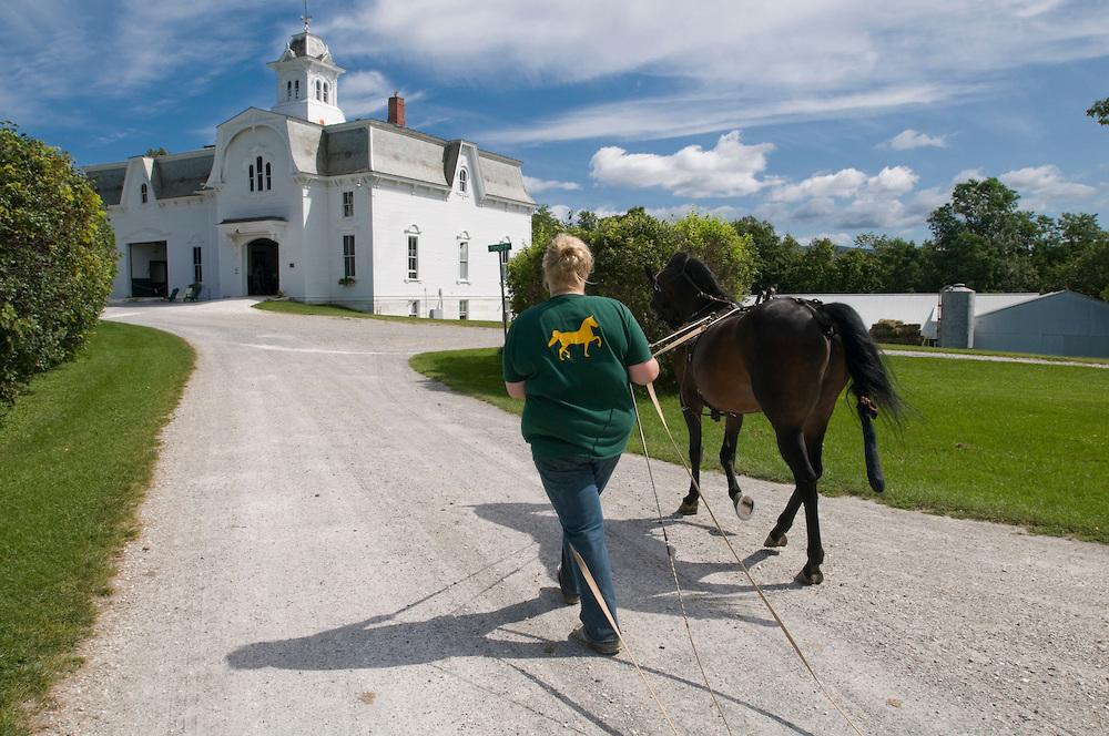 Returning-to-the-barn-Morgan-Horse-Farm-Weybridge-Vermont-BJS-20080826-181425-7283.jpg