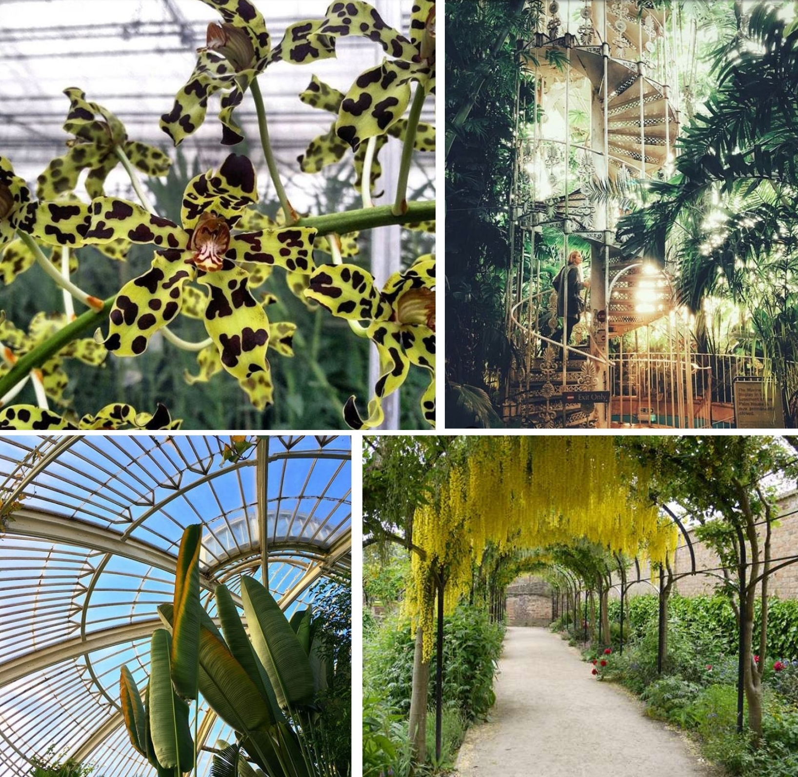 The Palm House at The Royal Botanic Gardens, Kew. Top left-A leopard orchid.