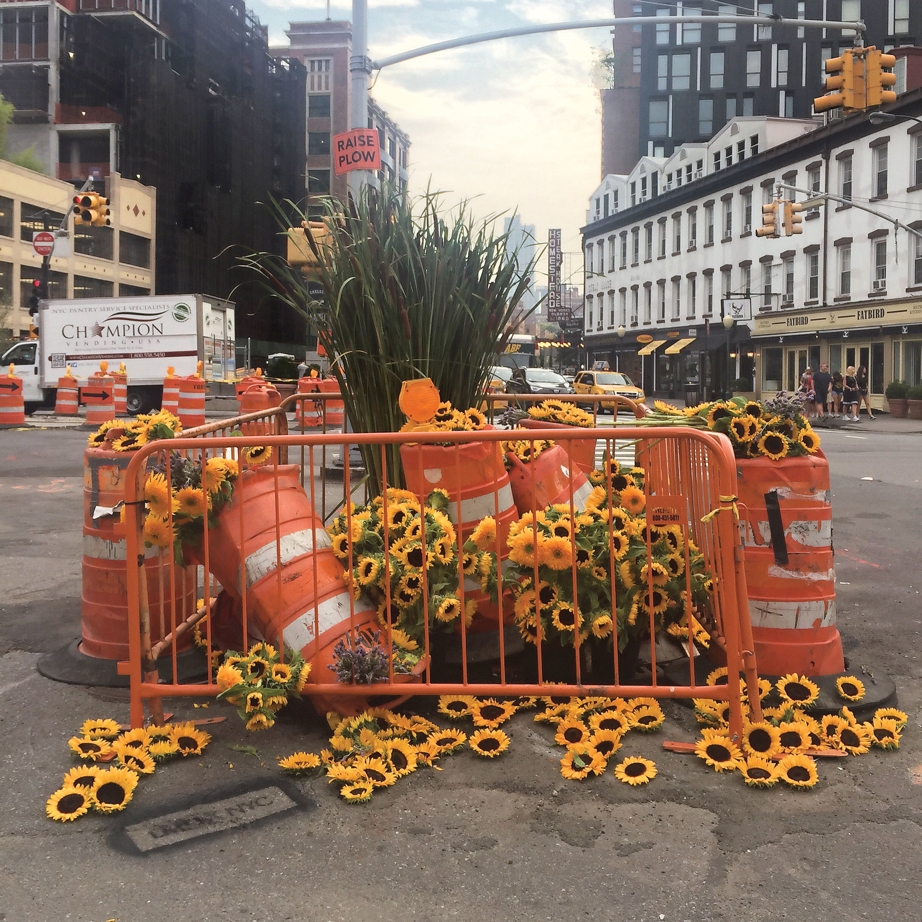 Sunflowers and cattails at a Greenwich Village construction site.