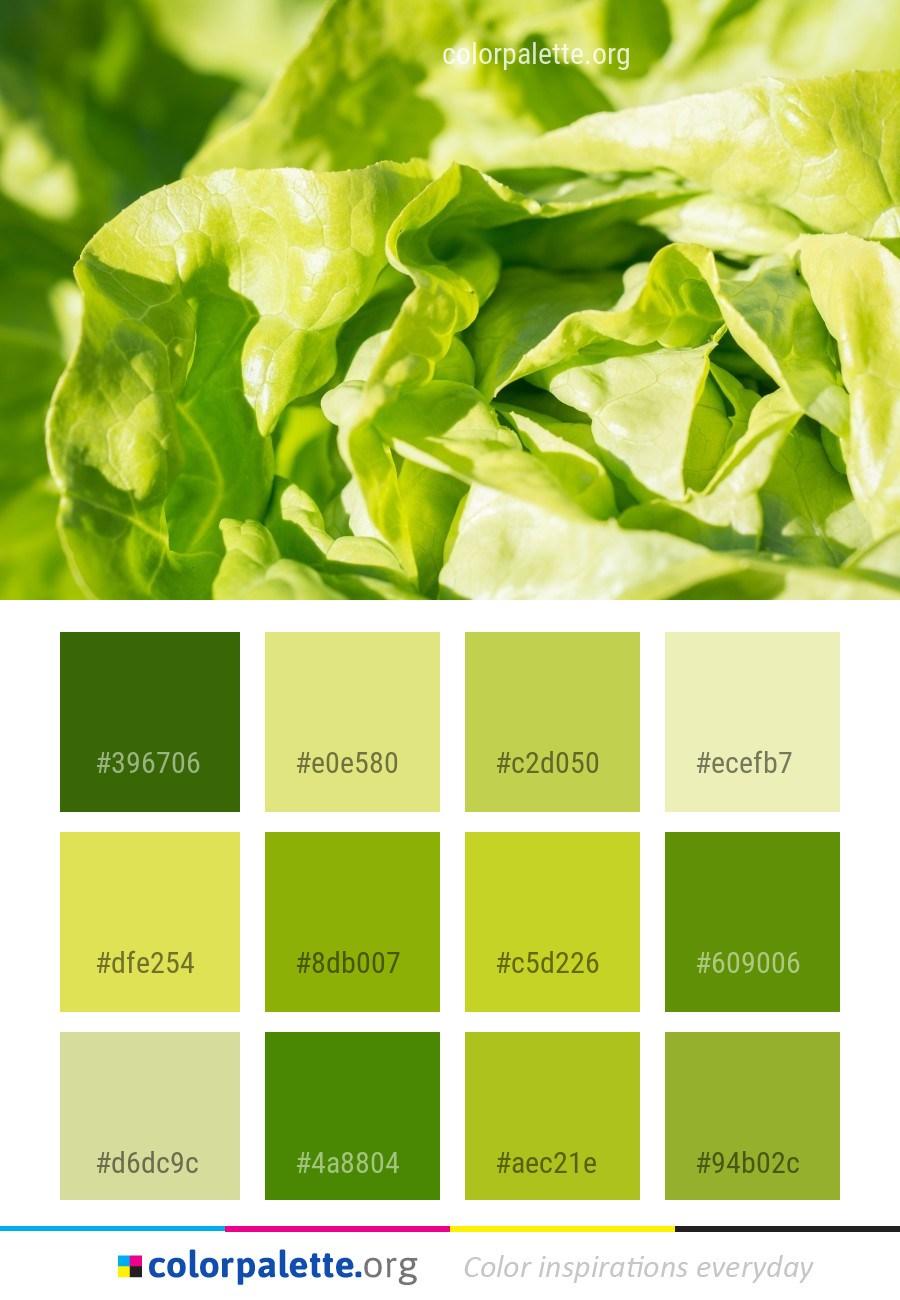 leaf_vegetable_vegetable_lettuce_colorpalette_43wnt.jpg