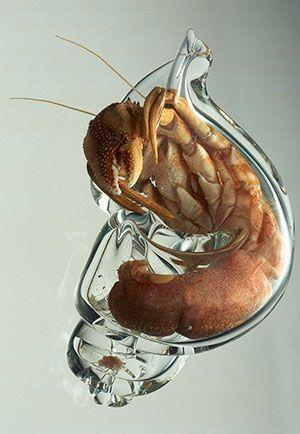 Hermit Crab Naked 04.jpg