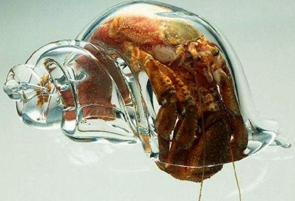 Hermit Crab Naked 03.jpg