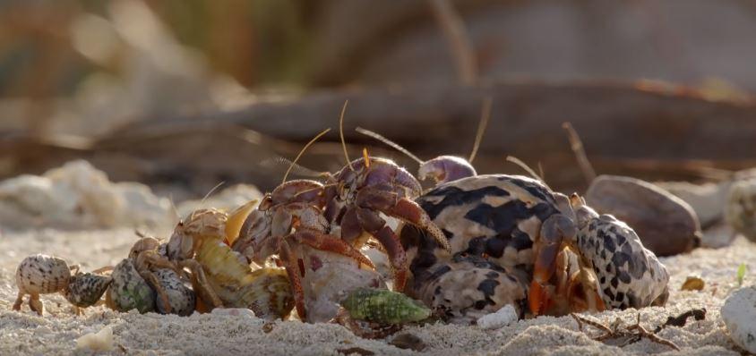 Crab Line 01.JPG
