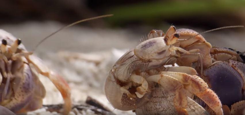Small Crab 01.JPG