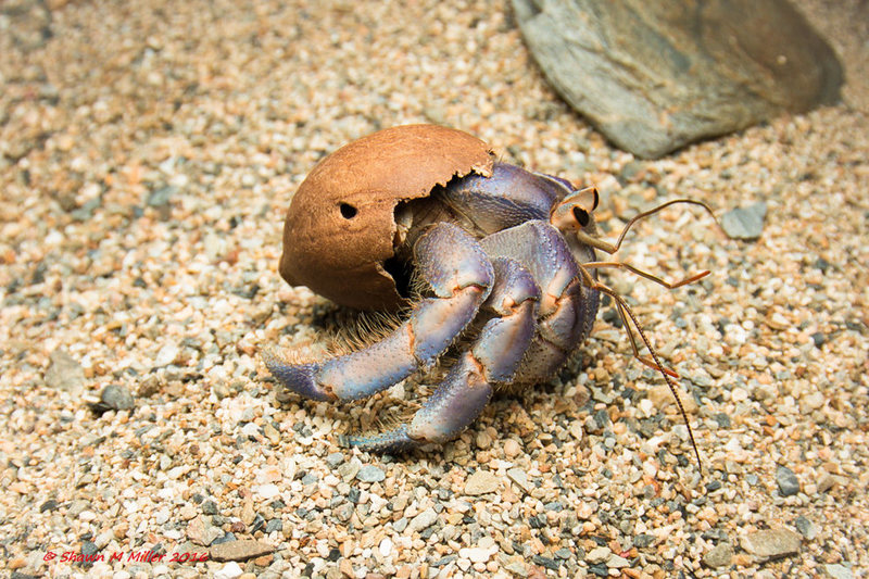 Hermit Crab Trash 05.jpg
