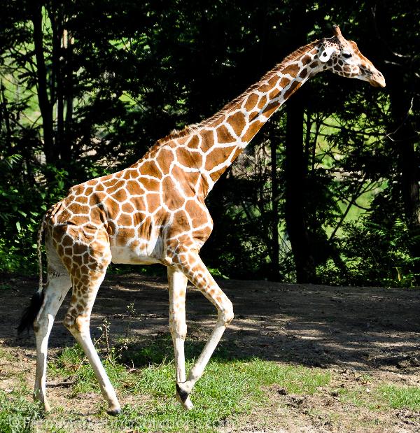 farm animal safari (1 of 1)