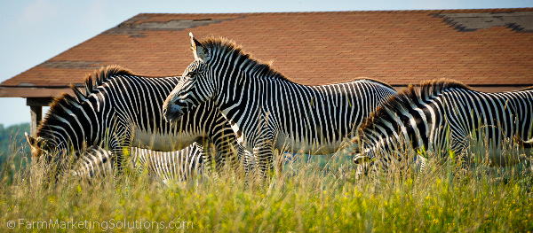 farm animal safari (8 of 9)