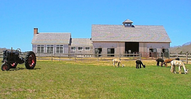 Island Alpaca Barn and Pasture