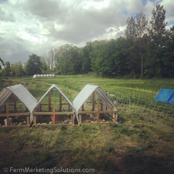 starting a farm-2279