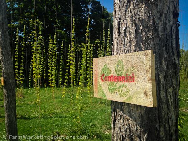 hop farming-3137