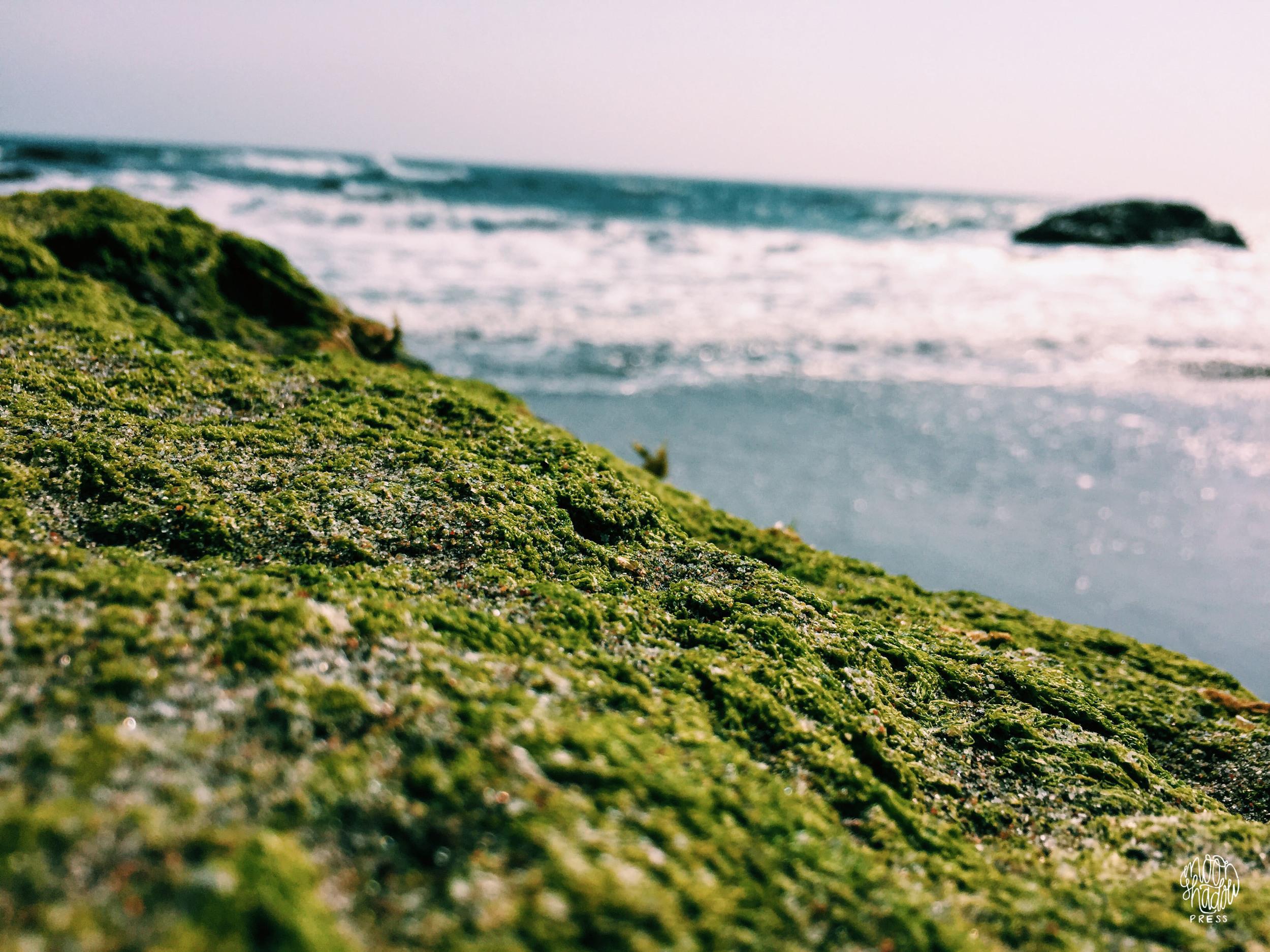 Coast_2L.jpg