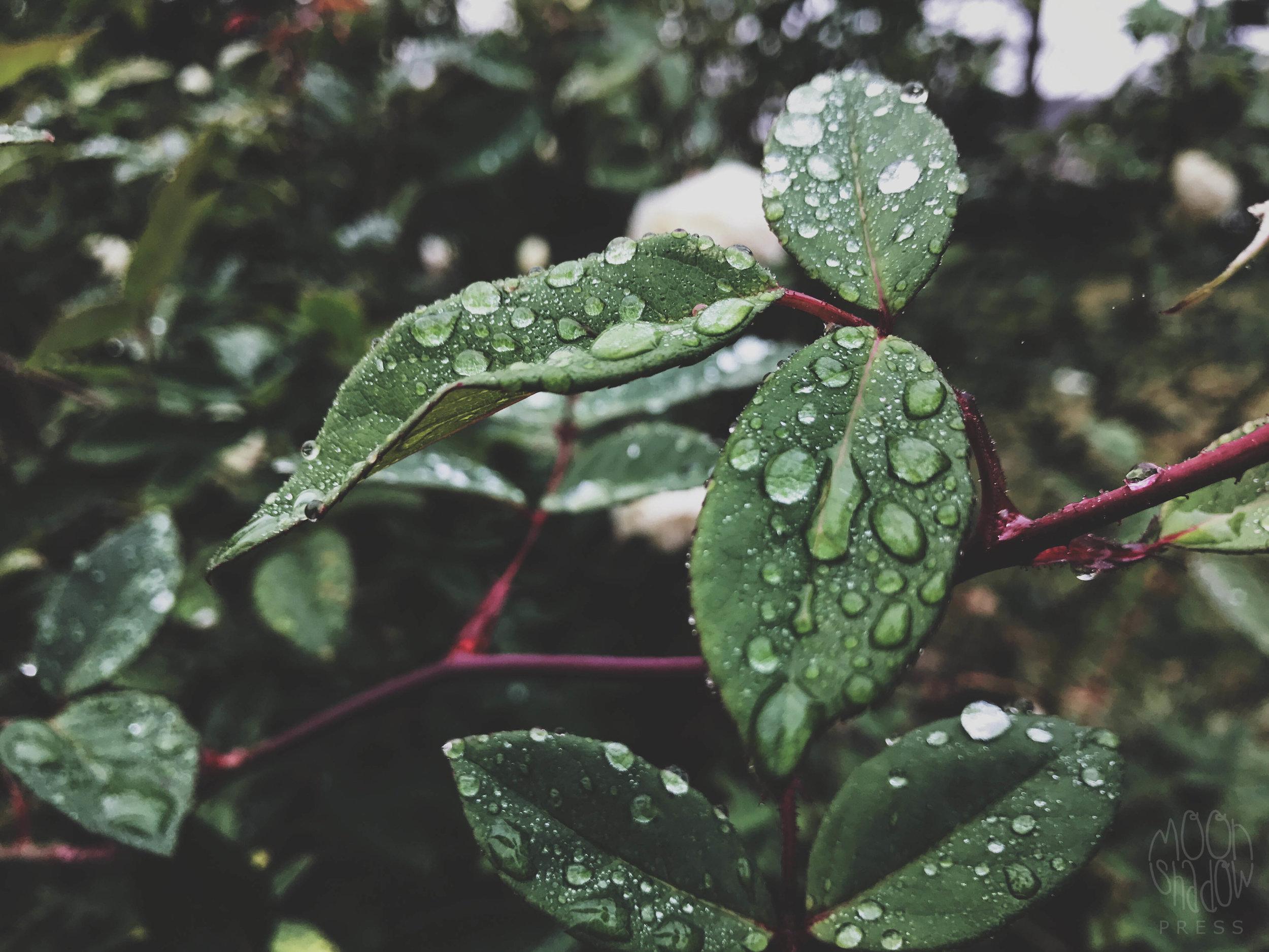 B-Rain5.jpg