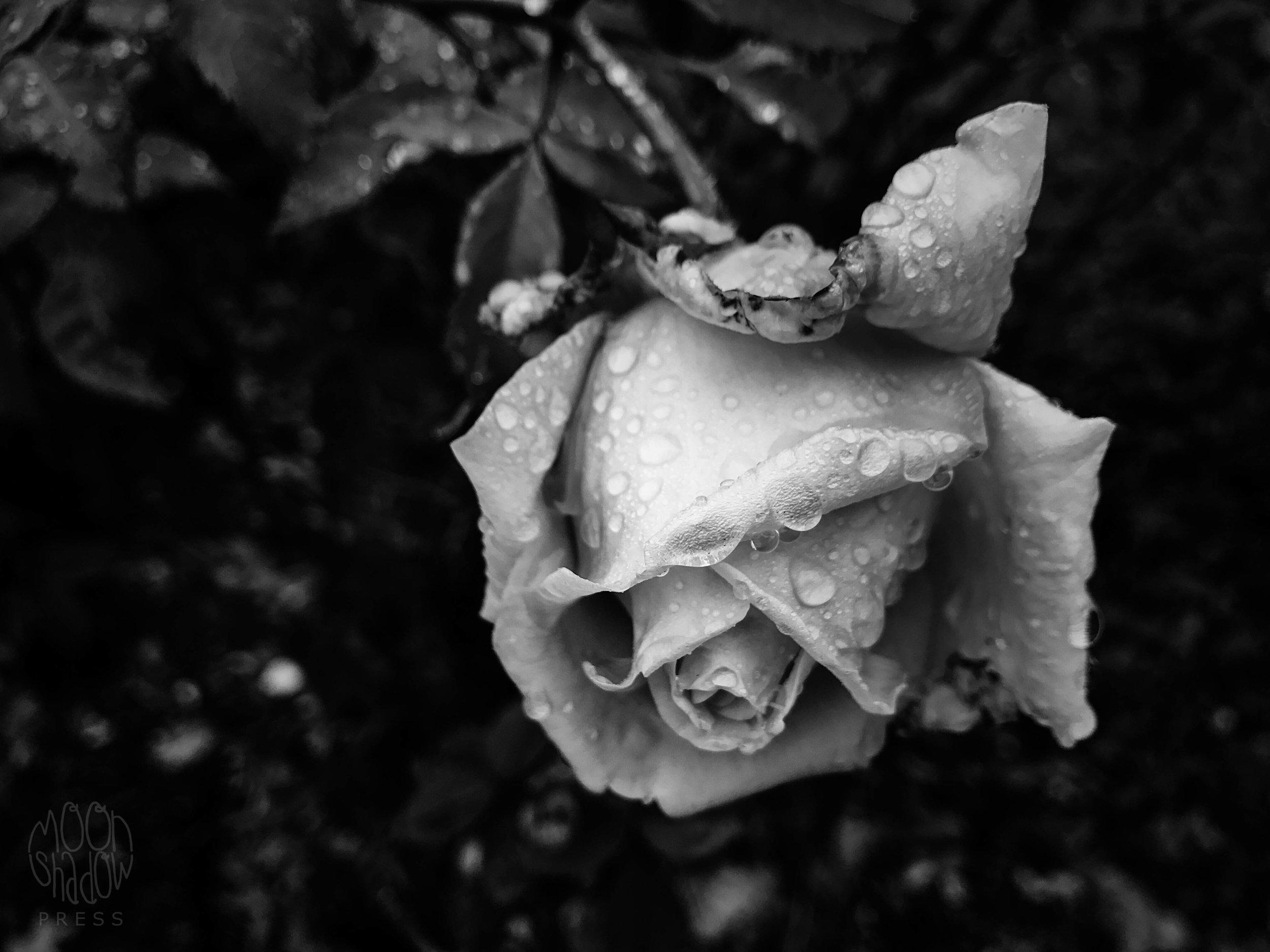 B-Rain8.jpg