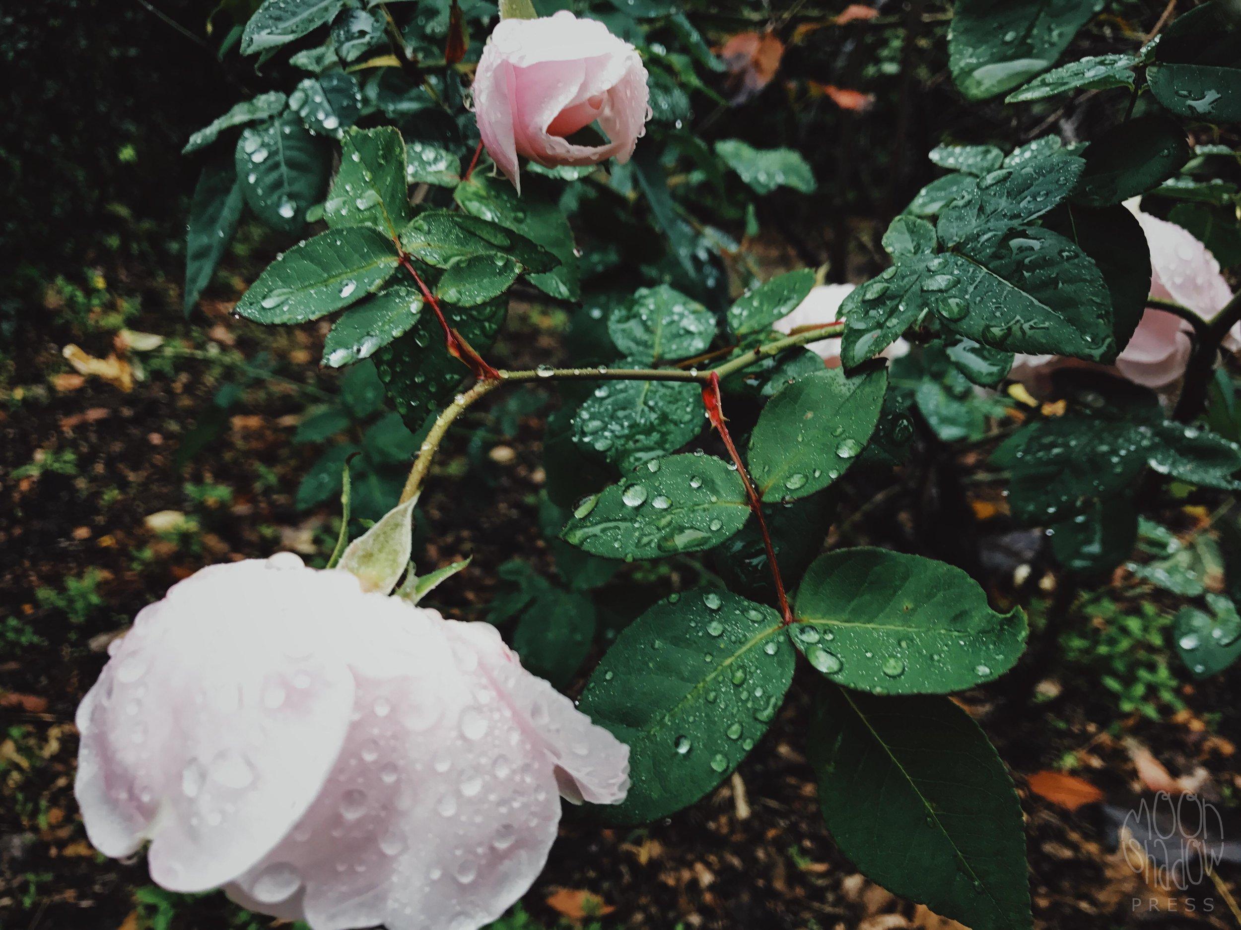 B-Rain13.jpg