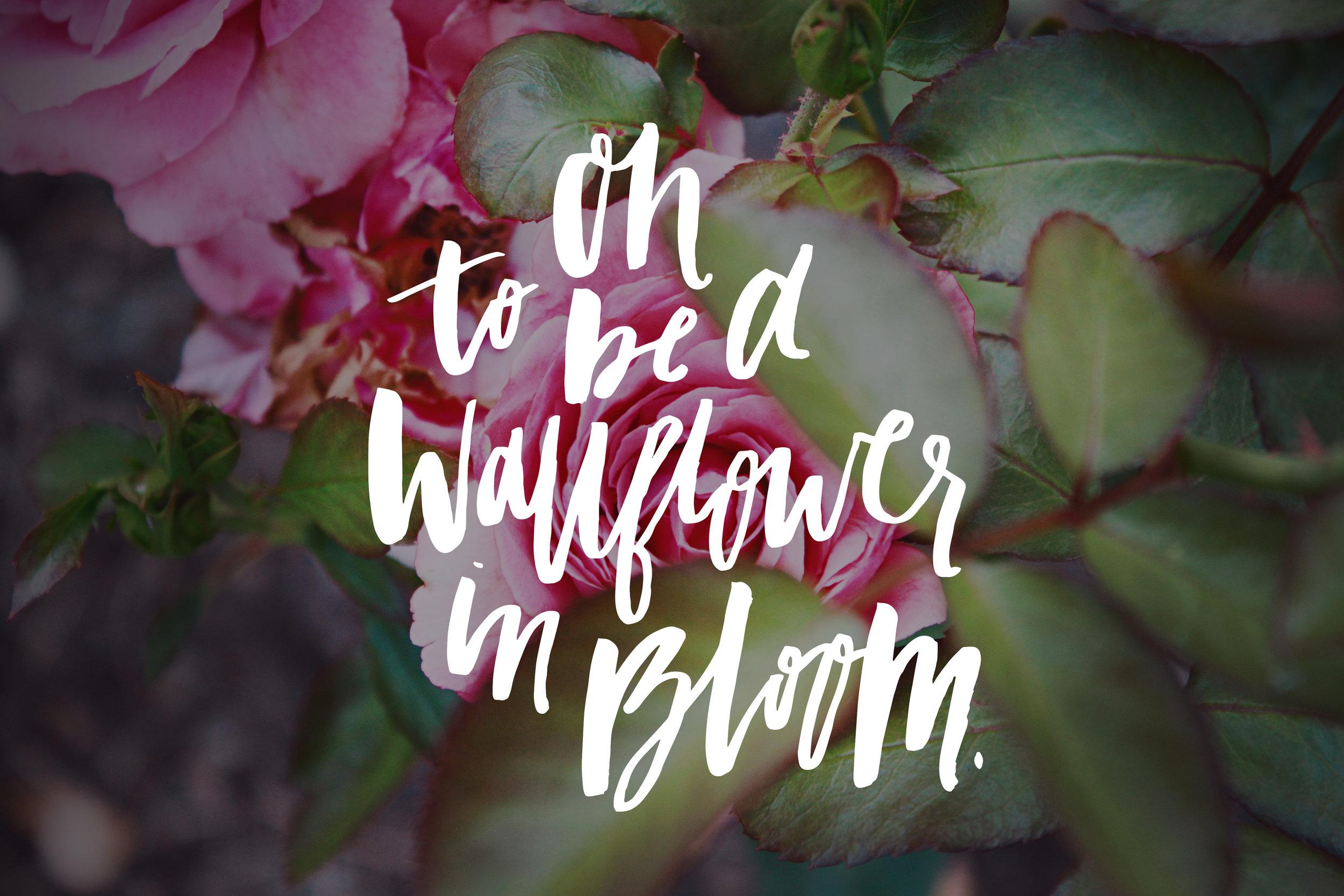 a_msprint_wallflowerbloom3.jpg