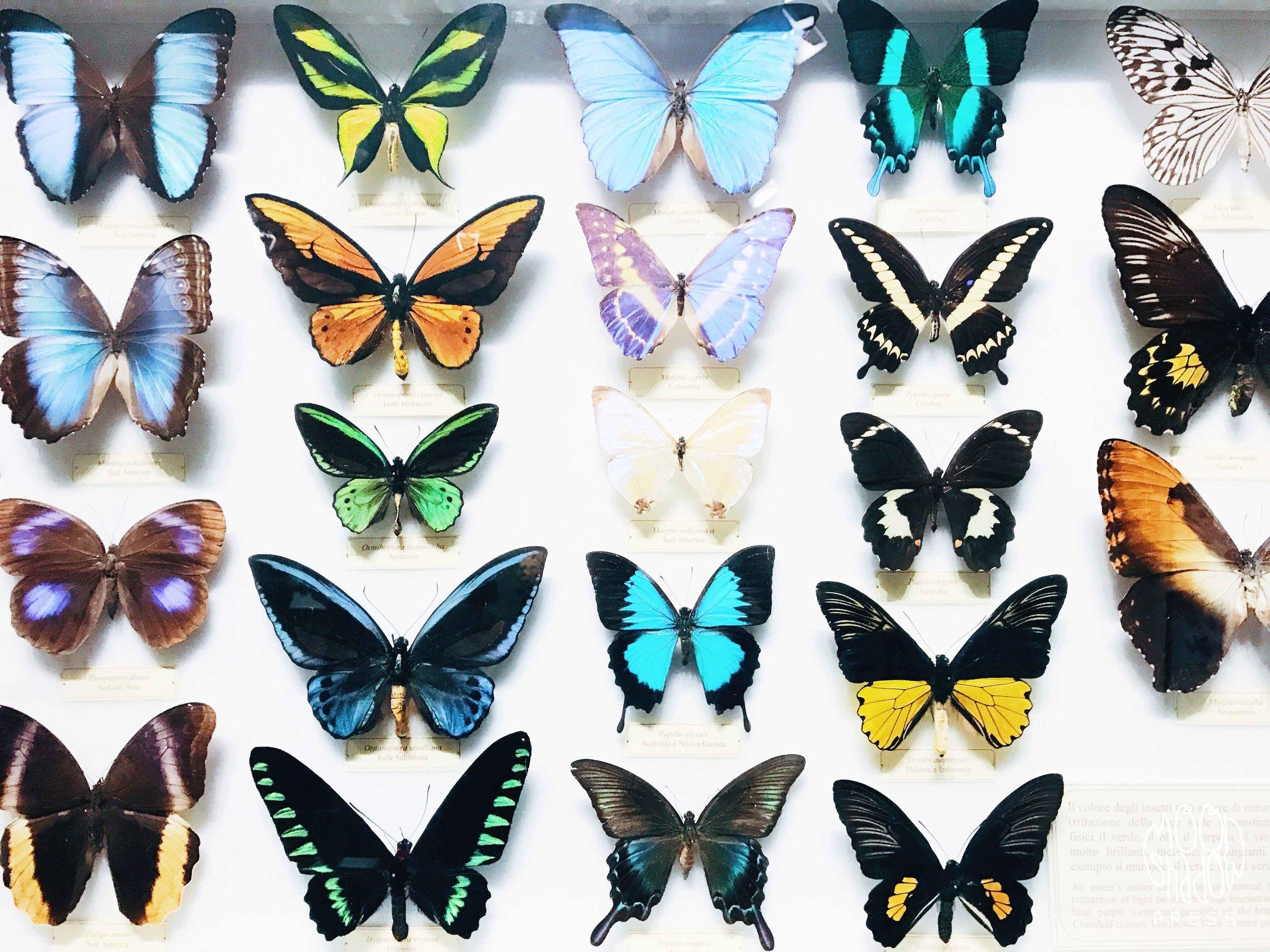Butterflies1L.jpg