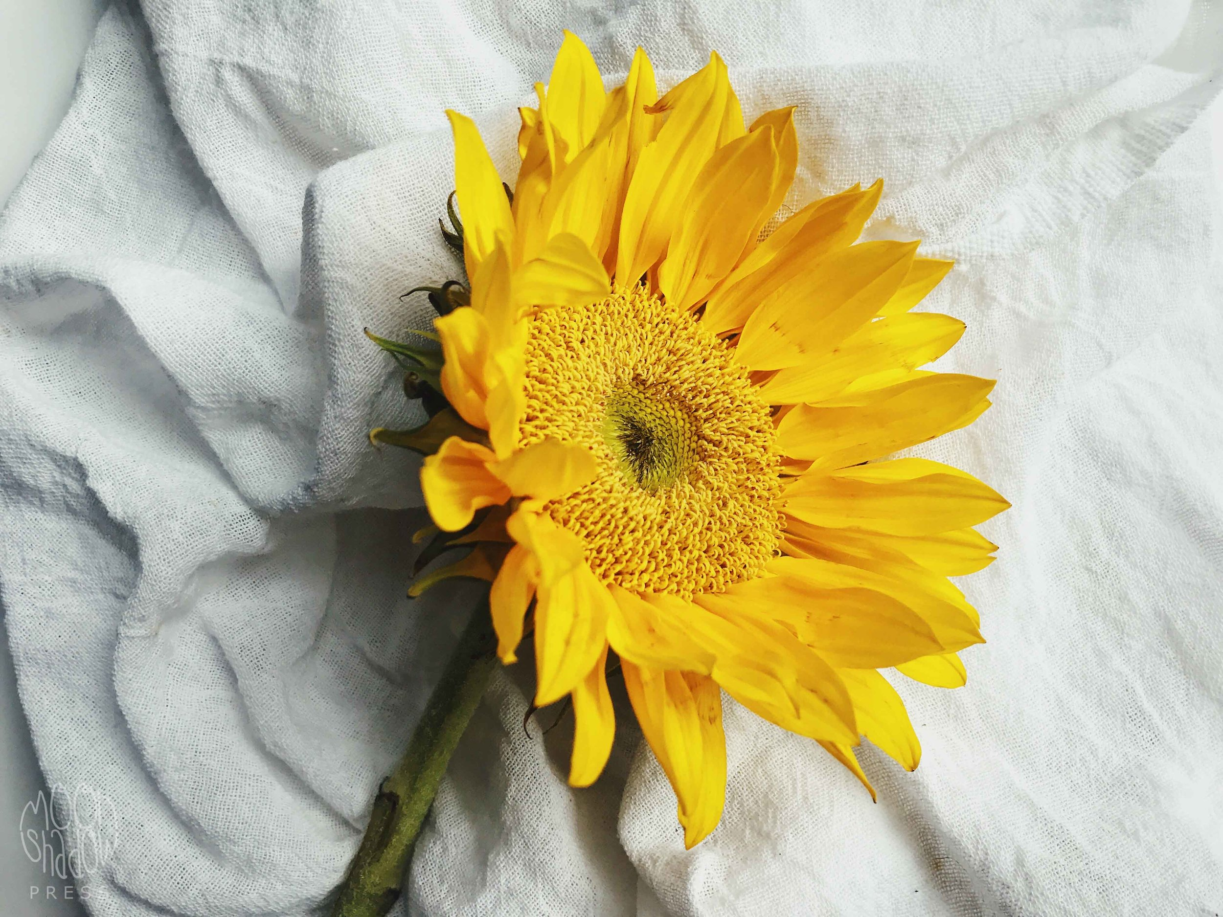Sunflowers9L.jpg