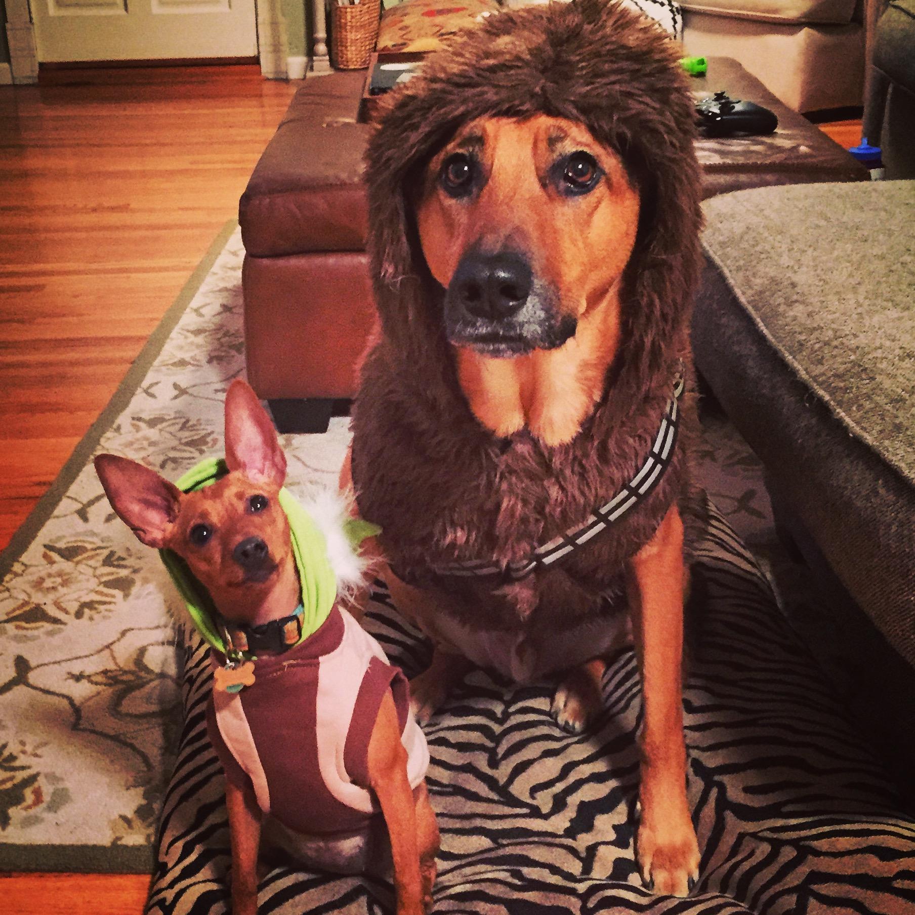 Star Wars Halloween costumes!