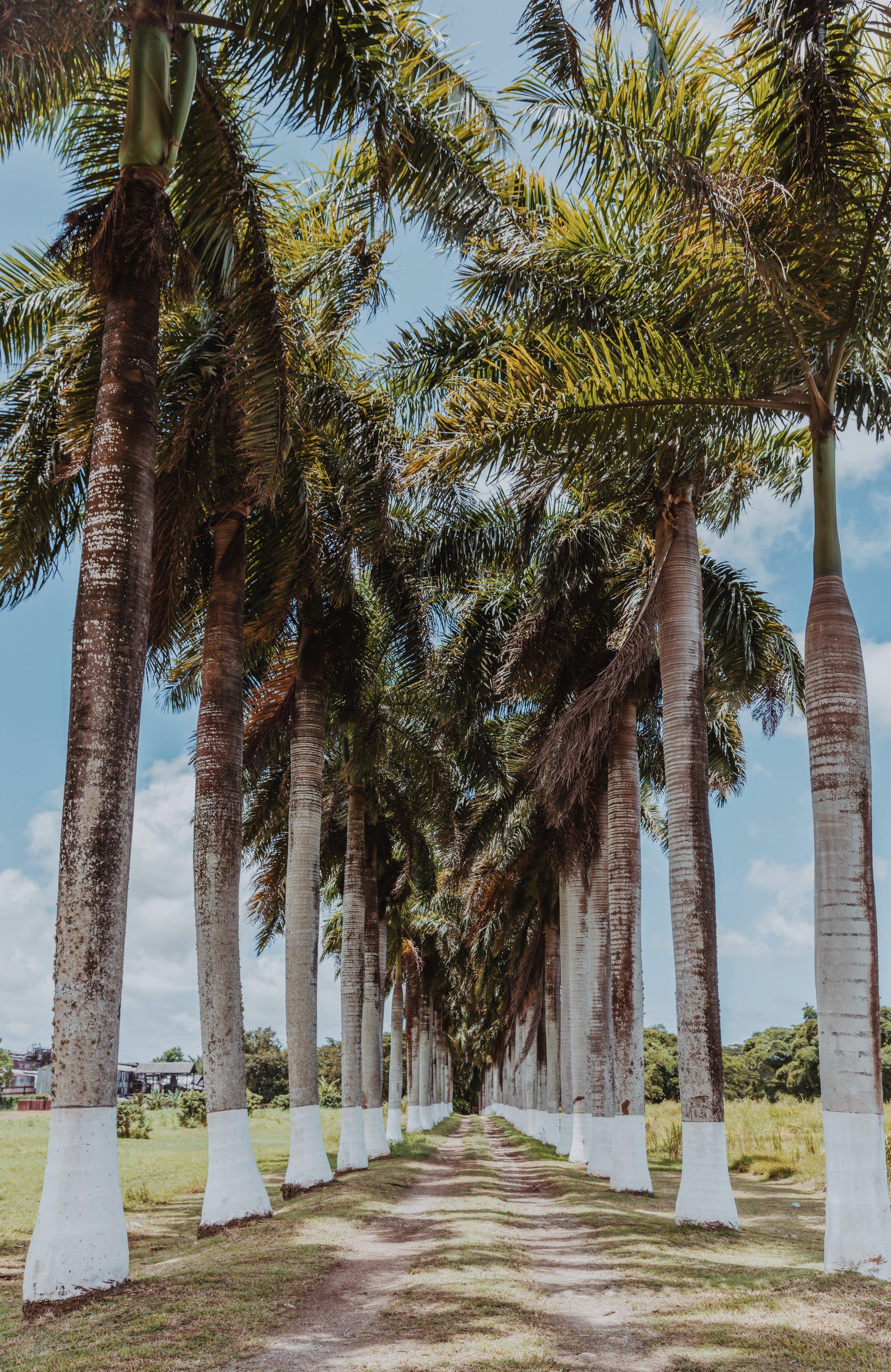 Luxury Jamaica-11.jpg
