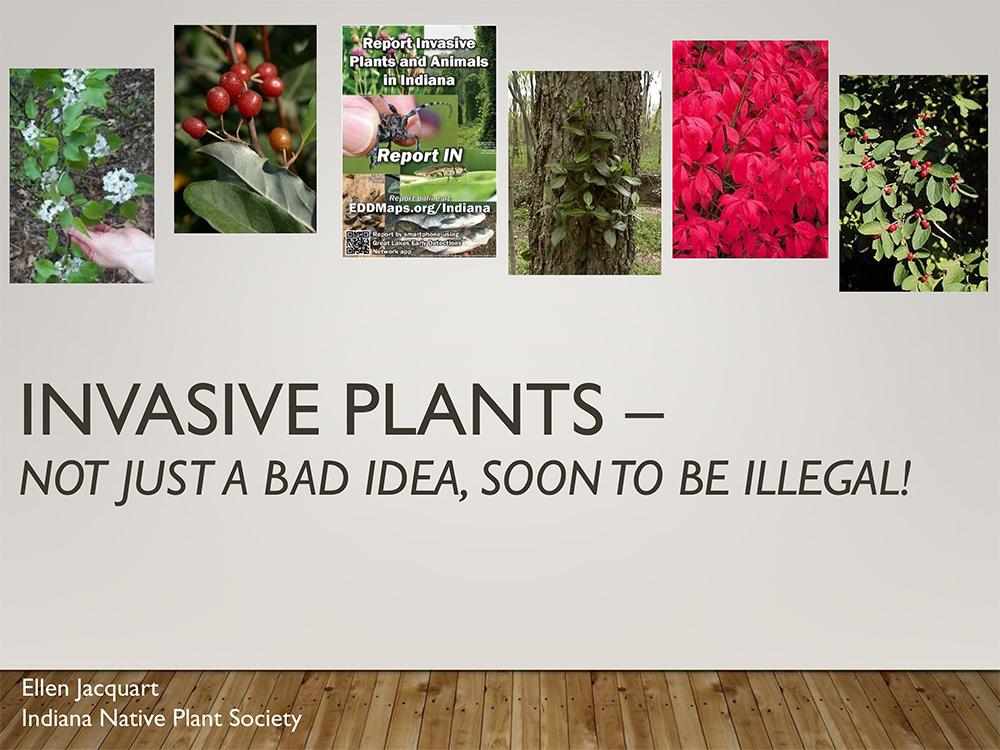 Terrestrial-Invasive-Plant-Rule-INPS-Plant-Sale.jpg