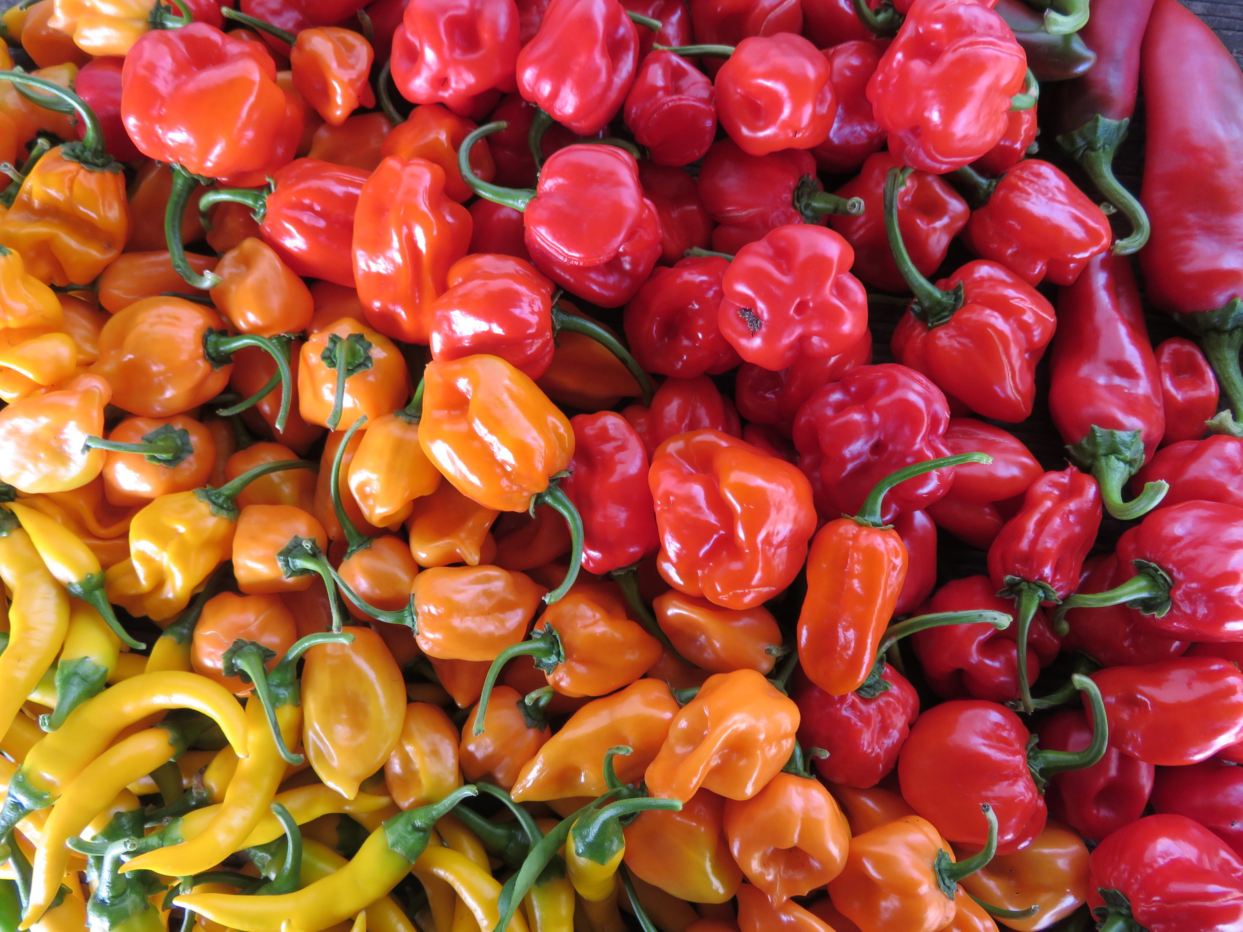 Did you know that we grew more than 10 different kinds of peppers on the farm this year?
