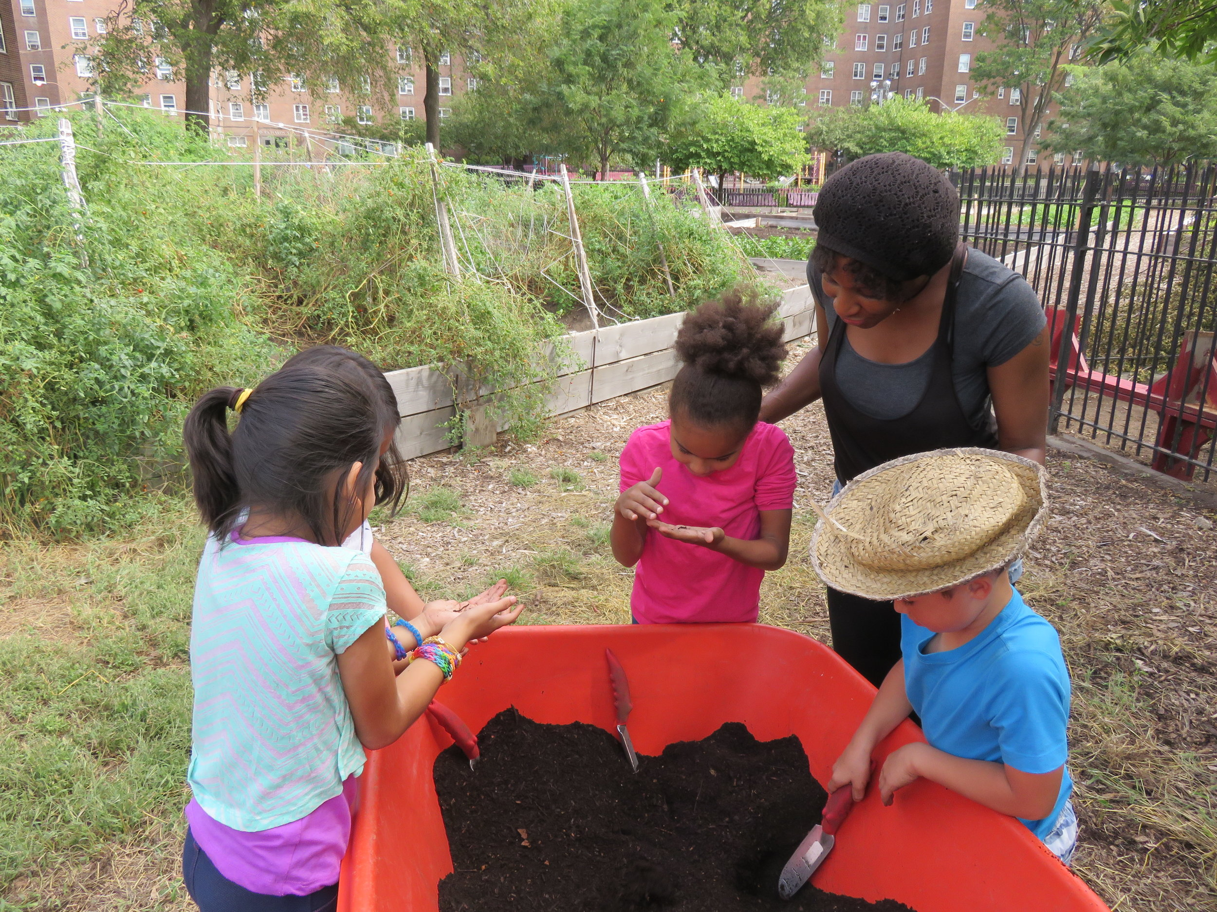 Shannon showing a group of PS 15 students around the NYCHA Red Hook Houses farm.