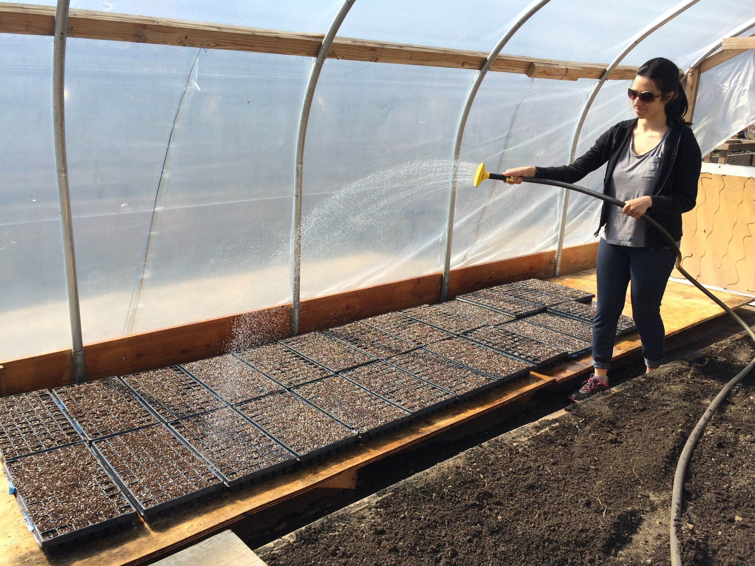 Saara watering our starts at our borrowed greenhouse (thanks friends in Brownsville!).