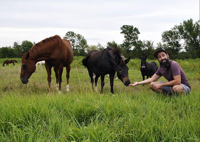 | S Q U A D | (ceci n'est pas un cheval) . .📸:@kassideeq . .#horses #squad #man #beard #beardsofinstagram #travel #adventure #lfk #cityboy #country