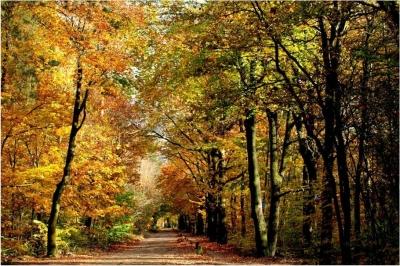 bosgidsen_herfst.jpg