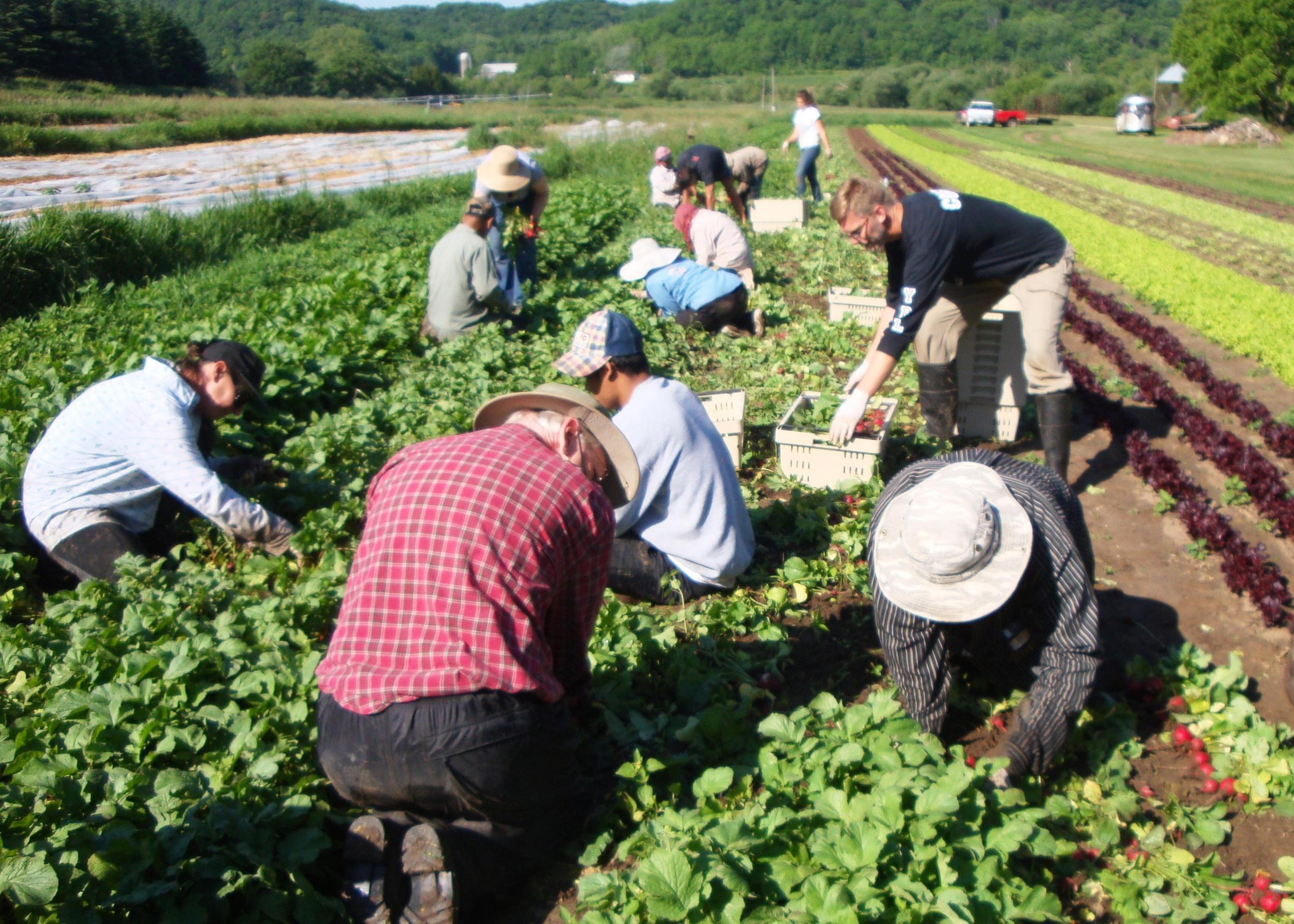 Harvest Vermont Valley.JPG