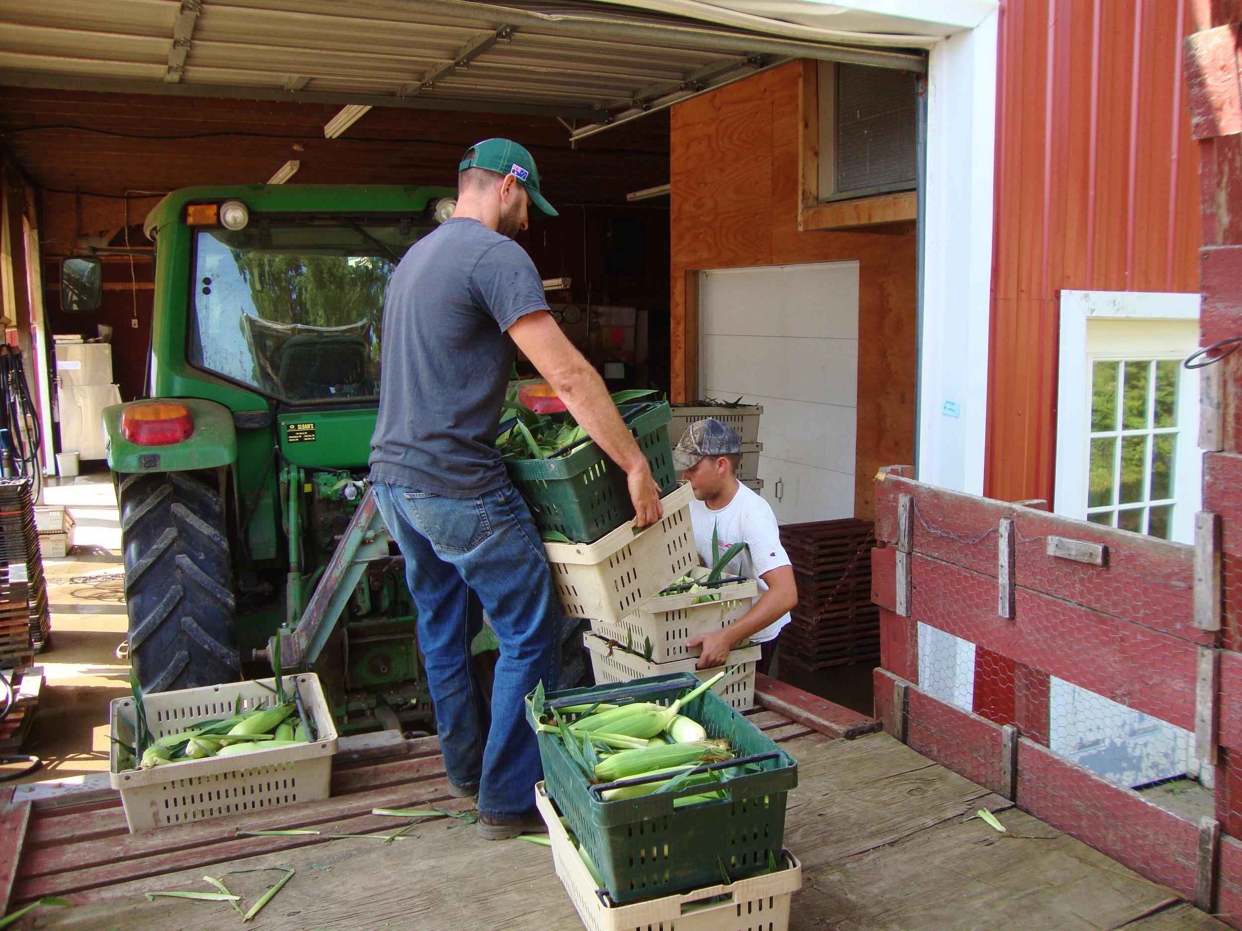 Sweet Corn Vermont Valley.JPG