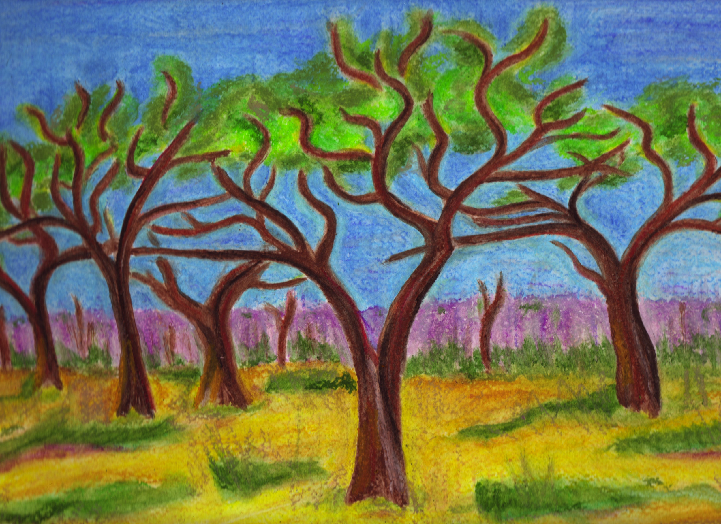 mongongo trees copy.jpg