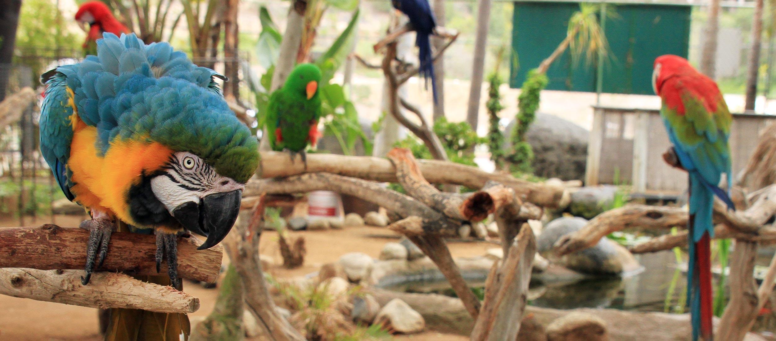 Free Flight Exotic Bird Sanctuary