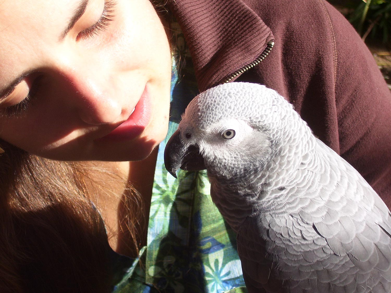 Bird Behavior Consultation