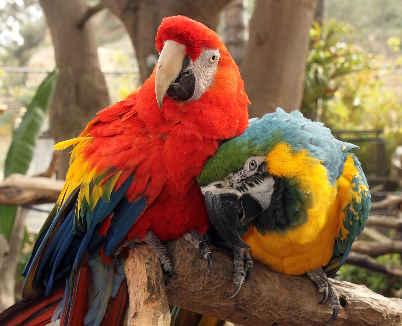 Bird Socialization