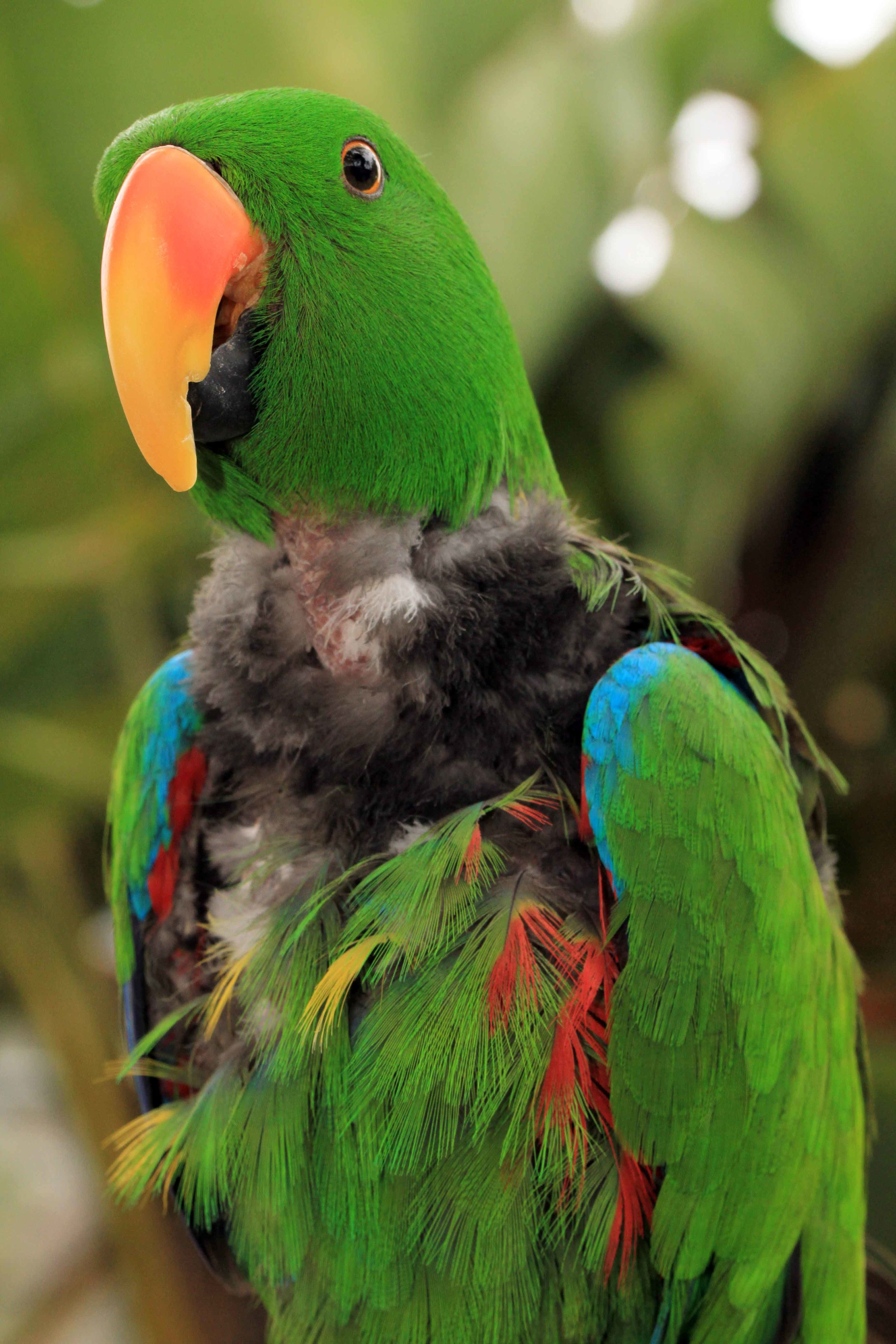 Adopt A Companion Bird | Free Flight Exotic Bird Sanctuary